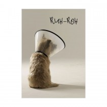 Dog in Cone, Get Well Soon