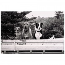 Dogs in Truck, We'll Miss You